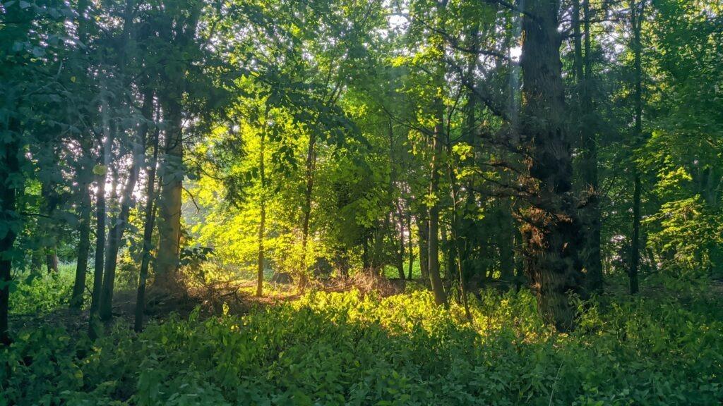 Woodland at Deepdale Farm